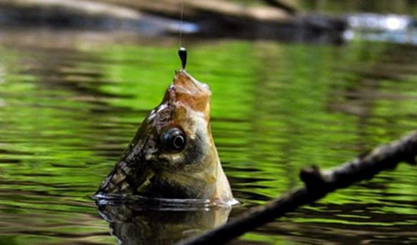"""Що робити якщо не клює? 7 простих порад рибалкам як """"заставити"""" рибу клювати"""