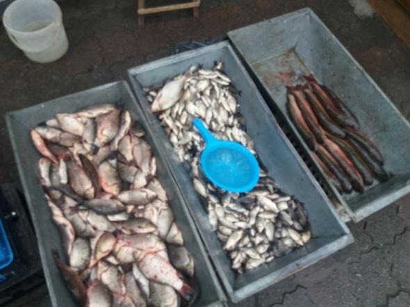 Протягом семи днів виявлено 34 правопорушення, - рибоохоронний патруль Вінниччини