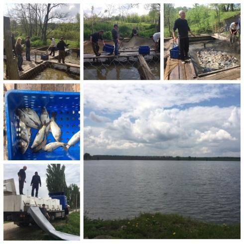 У Кирнасівське водосховище вселили майже 900 кг коропа